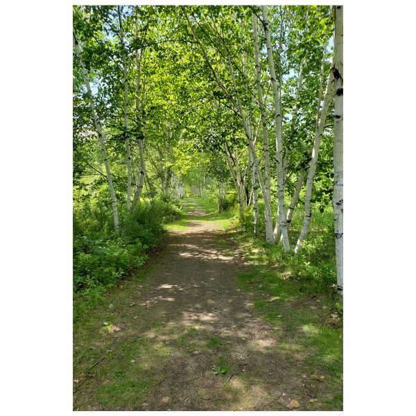 Nature Walk Canvas